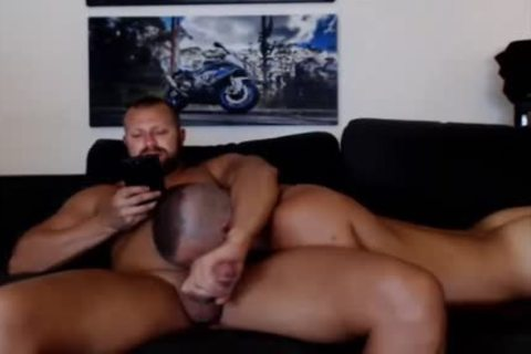 young Bear Sucks A daddy Bears 10-Pounder Live On Cruisingcams Com